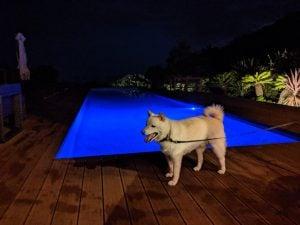 夜のプール1